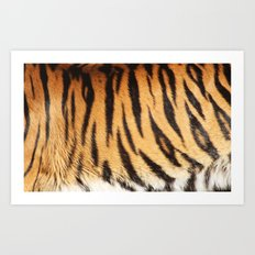 tiger stripes Art Print