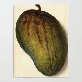Vintage Illustration of a Mango Poster