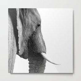 Black and white elephant portrait Metal Print
