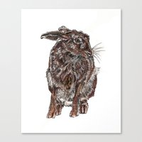 hare Canvas Prints featuring Hare by Meredith Mackworth-Praed
