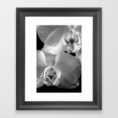 Orchid with Morning Dew (Orchidee mit Morgentau) Framed Art Print