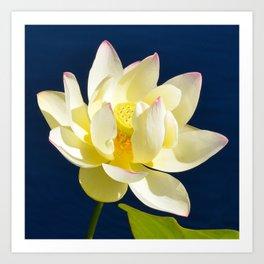 Lotus Flower by Teresa Thompson Art Print