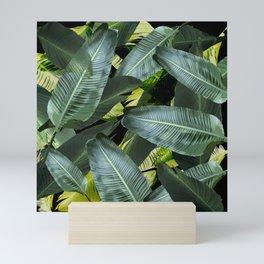 Topical palm leaf, banana leaf, black background, greens, Beach Hawaii decor Mini Art Print