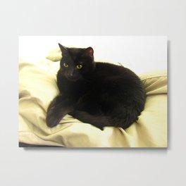 Queen Kitty 2795 Metal Print