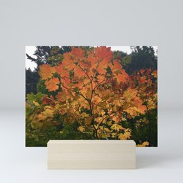 Autumn Shade Mini Art Print