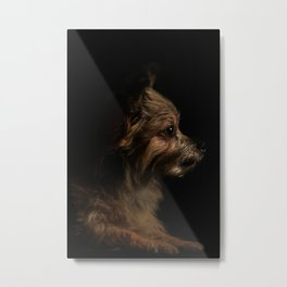 Long-Coat Chihuahua Metal Print