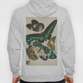 E.A.Séguy - Papillons / Butterflies (1925) Plate 10 Hoody