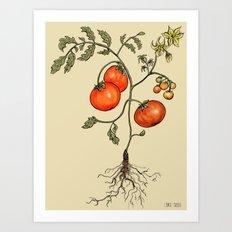 Tomato Botanical Art Print