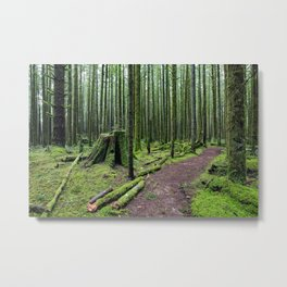 All covered with green moss magic forest Metal Print