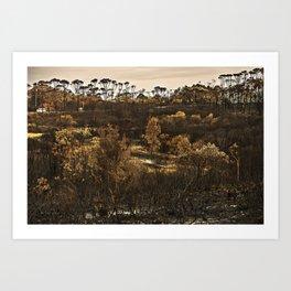 Burnt out bushland Art Print