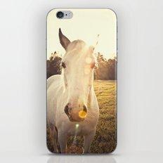Sunlit Horse iPhone & iPod Skin