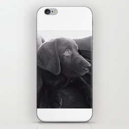 Labrador Puppy Portrait iPhone Skin