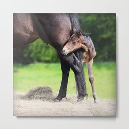 first  hours. Metal Print