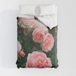 Dark Rose Comforters