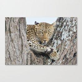 Wild leopard Canvas Print
