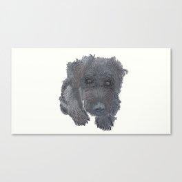 Schnoodle Canvas Print