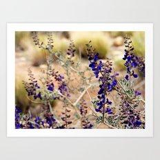 Blue Desert Lupine Art Print