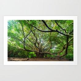 The Great Banyan Tree, Haleakala, Maui, Hawaii Art Print