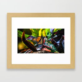 Hawaiian Monarch Framed Art Print