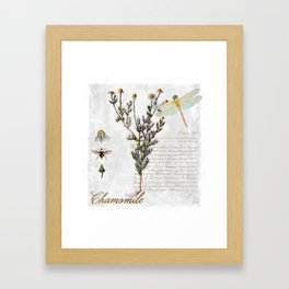 Chamomile Herb, Dragonfly Bumble Bee Botanical painting, Cottage style Framed Art Print