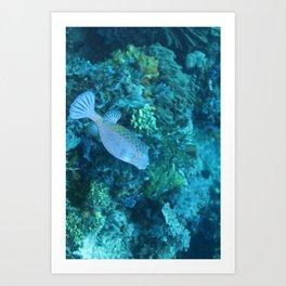 Blue pursed-lip boxfish Art Print