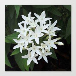 White Verbena Canvas Print
