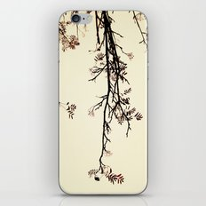 Delicate like rain iPhone & iPod Skin