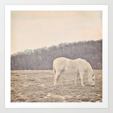Pretty White Pony  Art Print