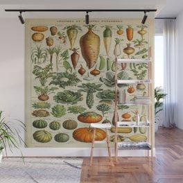 VEGETABLES Legumes Et Plantes Potageres Vintage Scientific Illustration French Language Encyclopedia Wall Mural