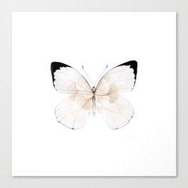 White Ginkgo Canvas Print