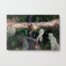 Eurasian Eagle Owl In Flight Metal Print