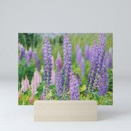 Wild Purple Flowers on Fidalgo Island Mini Art Print