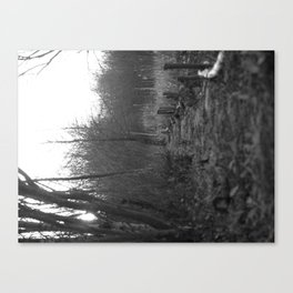 Path through the Marshes Canvas Print