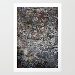 Beauty in Small Places Art Print
