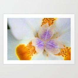 Fortnight Lily Art Print