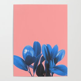 Blue Plant Pink Background Poster