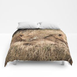 Camouflaged African Male Lions of the Kalahari Desert Comforters