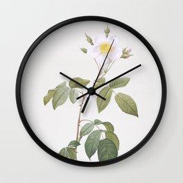 Vintage Big Leaved Climbing Rose Illustration Wall Clock