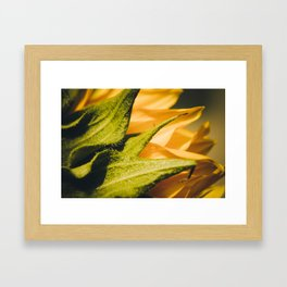 Sunflower (2) Framed Art Print