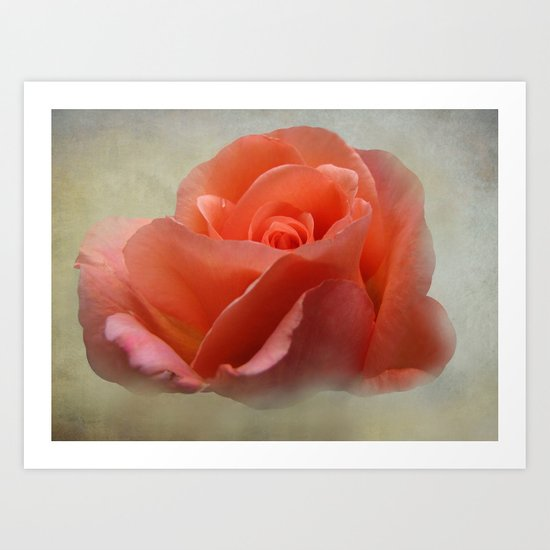 Romantic Rose Art Print