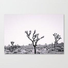 Joshua Tree Monochrome, No. 2 Canvas Print