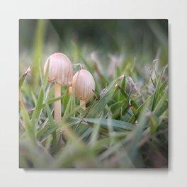 Fragile fungi Metal Print