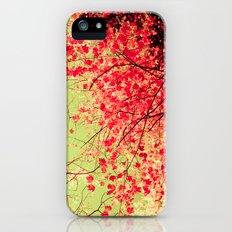 Color Drama II iPhone (5, 5s) Slim Case