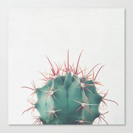 Ferocactus Canvas Print