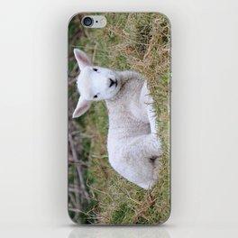 Lamb at rest iPhone Skin