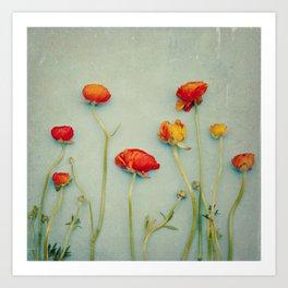 Red Ranunculus Flowers Art Print