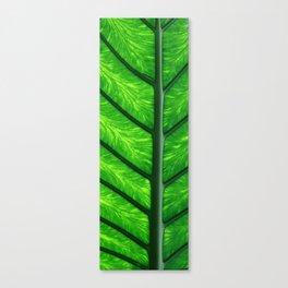 Leave of a palm Leinwanddruck