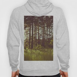 Summer Forest Sunlight - Nature Photography Hoody