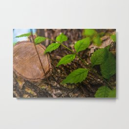Crawling Leaves Metal Print