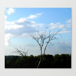 Tyanutʹsya k nebu  (reach for the sky) Canvas Print